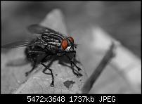 IMG 5942