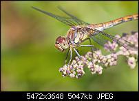 IMG 6530