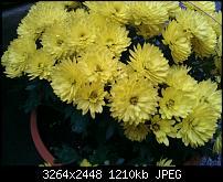 Blumen bei Tageslicht - früher Vormittag