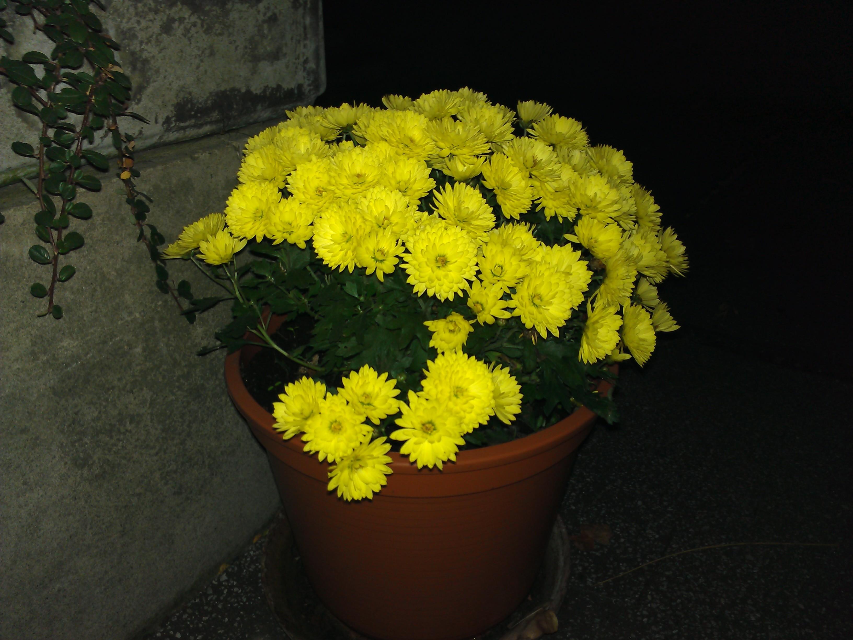Blumen mit Blitz bei Nacht