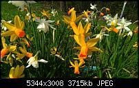 Eure Bilder mit der Kamera des Acer Jade Primo-wp_20160414_12_48_14_pro.jpg