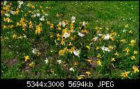 Eure Bilder mit der Kamera des Acer Jade Primo-wp_20160414_12_48_23_pro.jpg