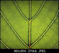 Android Wallpaper Sammlung-wallpaper69.jpg