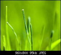 Android Wallpaper Sammlung-wallpaper_grass.jpg