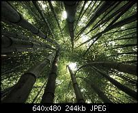 Android Wallpaper Sammlung-bamboo-trees_2.jpg