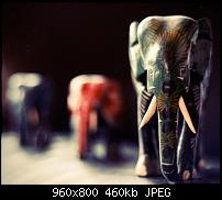 Android Wallpaper Sammlung-bokehn_elephant.jpg