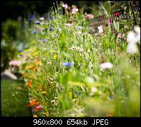 Android Wallpaper Sammlung-flowers_bokehn.jpg