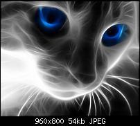 Android Wallpaper Sammlung-light-cat_57.jpg