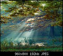 Android Wallpaper Sammlung-beauty-morning_71.jpg