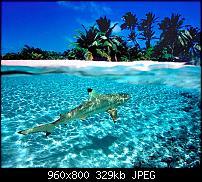 Android Wallpaper Sammlung-cocos-shark_116.jpg