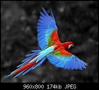 Android Wallpaper Sammlung-parrot_23.jpg
