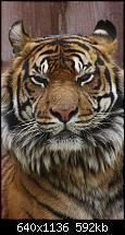 Der iPhone 5C Wallpaper Thread-gallery-6_animals-my-iphone-5-wallpaper-hd-animals-23-.jpg