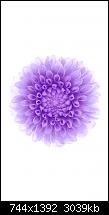 Der iPhone 6 Wallpaper Thread-15.png