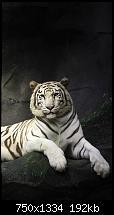 Der iPhone 6 Wallpaper Thread-attractive-white-tiger-iphone-6-wallpaper.jpg