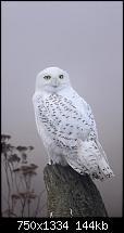 Der iPhone 6 Wallpaper Thread-white-wild-birds-iphone-6-wallpaper.jpg