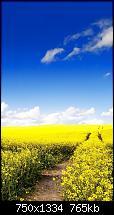 Der iPhone 6 Wallpaper Thread-blue-sky-canola-flower-garden-iphone-6-wallpaper-ilikewallpaper_com_750.jpg
