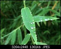 Fotoqualität des iPhone 6 Plus-img_0812.jpg