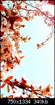 Der iPhone 6 Wallpaper Thread-cherry-blossoms-iphone-6-wallpaper.jpg
