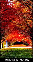Der iPhone 6 Wallpaper Thread-nature-red-trees-road-iphone-6-wallpaper-ilikewallpaper_com_750.jpg