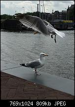 Fotoqualität des iPhone 6 Plus-imageuploadedbypocketpc.ch1468087211.599096.jpg