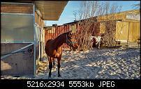 Blackberry PRIV - Fotoqualität-img_20151226_1446296.jpg