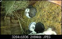 Blackberry Z10 Bilder und Videos der Kamera-img_00000004.jpg