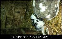 Blackberry Z10 Bilder und Videos der Kamera-img_00000005.jpg