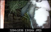 Blackberry Z10 Bilder und Videos der Kamera-img_00000006.jpg