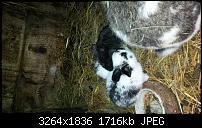 Blackberry Z10 Bilder und Videos der Kamera-img_00000007.jpg