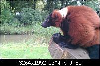 Geschossene Bilder mit dem Galaxy Nexus-img_20110920_145847.jpg