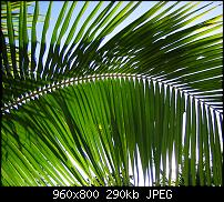 !!! Der GROSSE Wallpaper-Thread für das HTC Desire !-palm-leaf.jpg