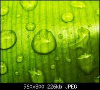 !!! Der GROSSE Wallpaper-Thread für das HTC Desire !-more-waterdrops.jpg
