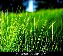 !!! Der GROSSE Wallpaper-Thread für das HTC Desire !-grass21ehwv.jpg