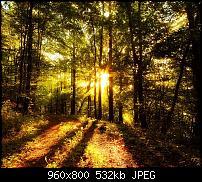 !!! Der GROSSE Wallpaper-Thread für das HTC Desire !-forest_sunlight.jpg