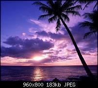 !!! Der GROSSE Wallpaper-Thread für das HTC Desire !-lila-sunset.jpg