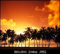 !!! Der GROSSE Wallpaper-Thread für das HTC Desire !-palm-sunset.jpg