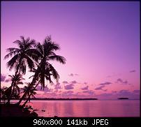!!! Der GROSSE Wallpaper-Thread für das HTC Desire !-pink-sunset.jpg