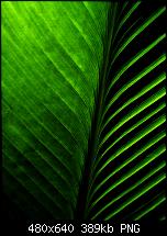 Hard Reset-wallpaper_leaf.png