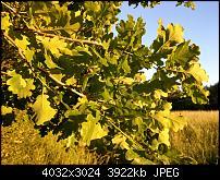 HTC U11 – Qualität der Fotos-imag0106.jpg