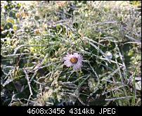 Huawei Mate 8 - Fotoqualität-img_20161114_114618.jpg