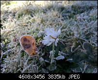 Huawei Mate 8 - Fotoqualität-img_20161114_114751.jpg