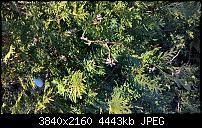 Huawei Mate 8 - Fotoqualität-wp_20170127_13_58_24_raw.jpg