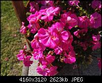 Fotos der Huawei Mate S Kamera-img_20151003_150808.jpg