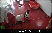 Nokia Lumia 930 - Bilder mit der Kamera und Meinungen zur Qualität-wp_20140706_12_51_22_pro__highres.jpg
