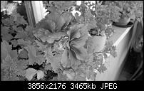 Nokia Lumia 930 - Bilder mit der Kamera und Meinungen zur Qualität-2014_10_19_14_41_48_proshot.jpg
