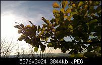Nokia Lumia 930 - Bilder mit der Kamera und Meinungen zur Qualität-wp_20141102_14_53_18_pro.jpg