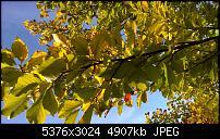 Nokia Lumia 930 - Bilder mit der Kamera und Meinungen zur Qualität-wp_20141102_14_53_27_pro.jpg