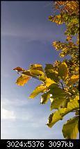 Nokia Lumia 930 - Bilder mit der Kamera und Meinungen zur Qualität-wp_20141102_14_53_35_pro.jpg