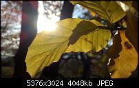 Nokia Lumia 930 - Bilder mit der Kamera und Meinungen zur Qualität-wp_20141102_14_54_59_pro.jpg
