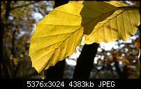 Nokia Lumia 930 - Bilder mit der Kamera und Meinungen zur Qualität-wp_20141102_14_55_14_pro.jpg